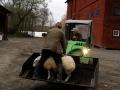 Transport av får
